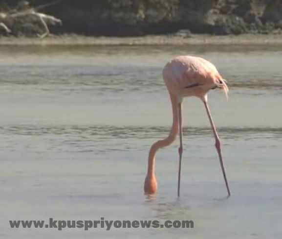 Birds name - flamingo bird