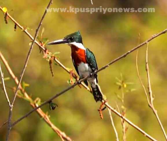 Birds name - kingfisher bird