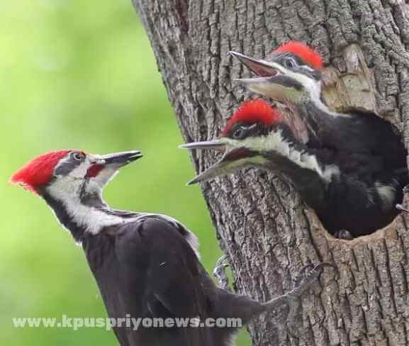 Birds name - woodpecker bird